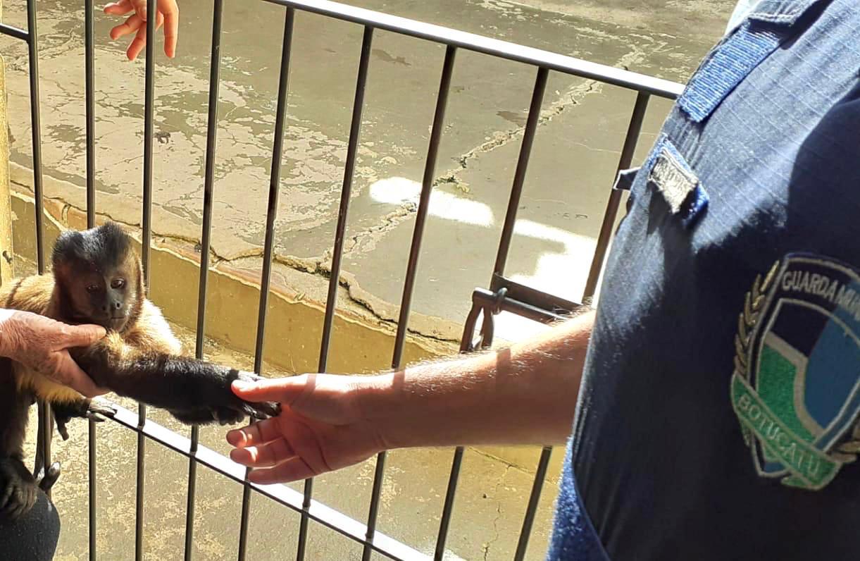 GCM resgata macaco-prego preso na corrente em garagem de casa