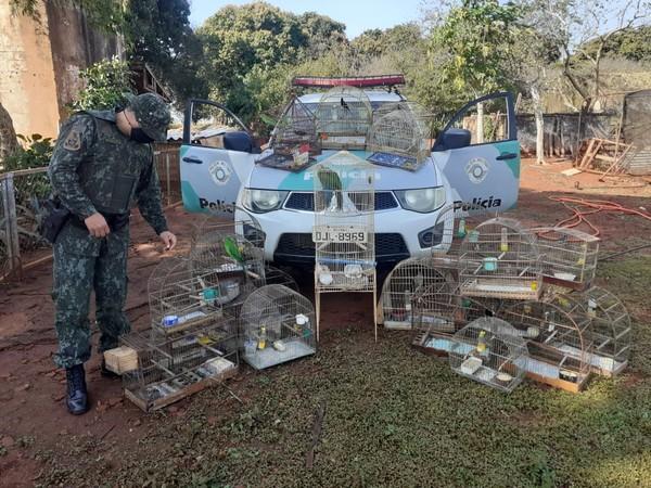 Mulher é multada em R$ 22 mil por manter pássaros em cativeiro em Santa Cruz do Rio Pardo