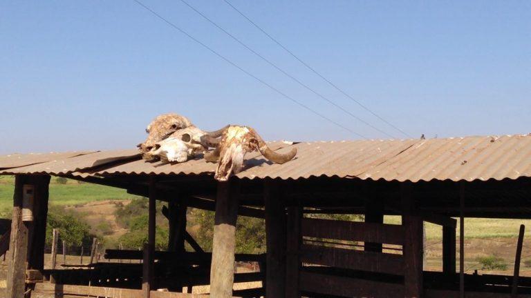 Dono de açougue é autuado por abate ilegal de animais em sítio de Borborema